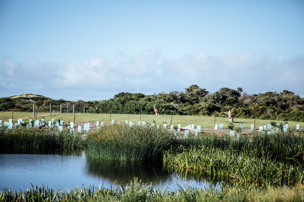 the cape wetland